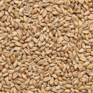 Солод пшеничный пивоваренный (Беларусь)