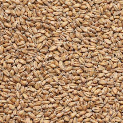 Солод пшеничный пивоваренный WHEAT MALT (VIKING MALT)